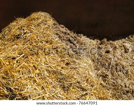 stock photo : Heap of Horse manure