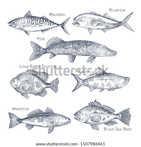 Bluefish logo vector
