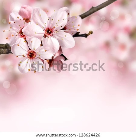 Spring border background with pink blossom - stock photo