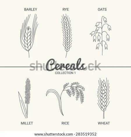 Bread vintage design template. Wheat,… Stock Photo