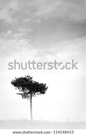 one tree black and white - stock photo