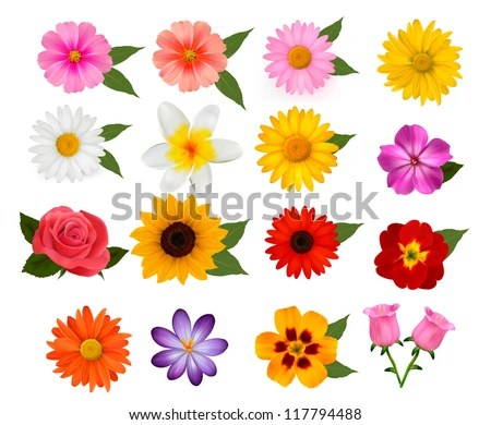 Big of beautiful colorful flowers. Vector illustration. - stock vector