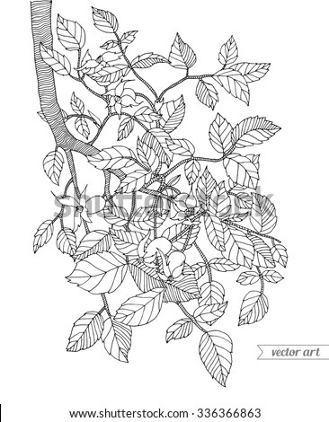 Forest Tree Branch With Leaves, Wild Berries. Vector. Hand