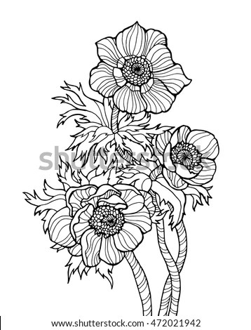 Royalty-free Anemone flowers, forest plant with line