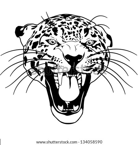 Leopard Wild Cat Outline Black And White Vector