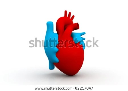 Shutterstock Red Heart Anatomy Also As Footage Available ...