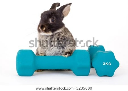 stock photo : black bunny and a weight