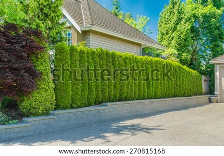 """green fence ' evergreen plants"