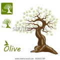 Olive garden logo vector an old olive tree and an