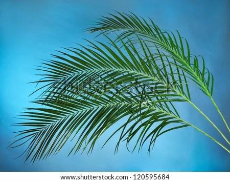 Bilderesultat for palm branches