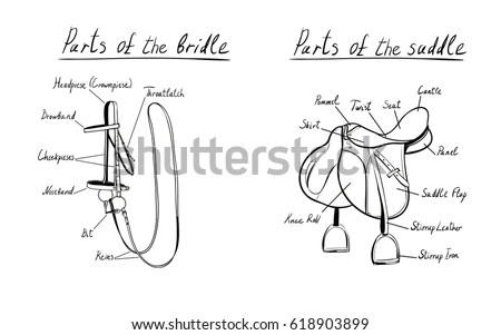 Royalty-free Parts of western saddle and bridle