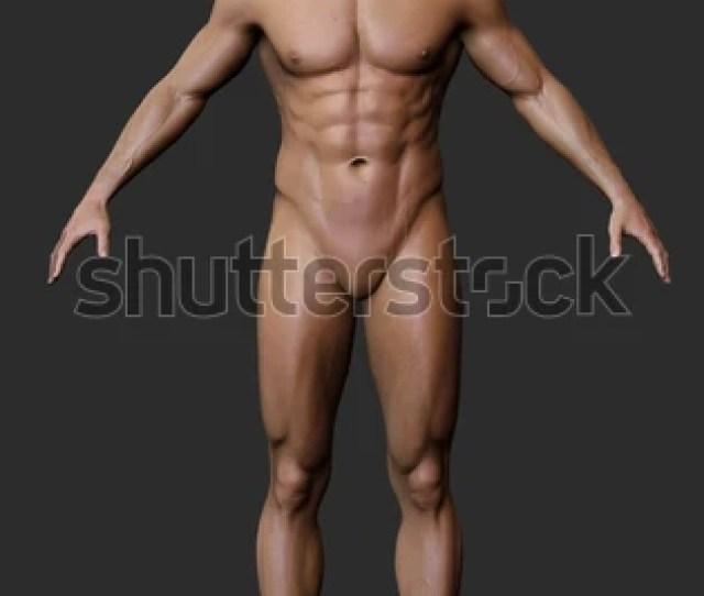 3d Male Body Anatomy Naked