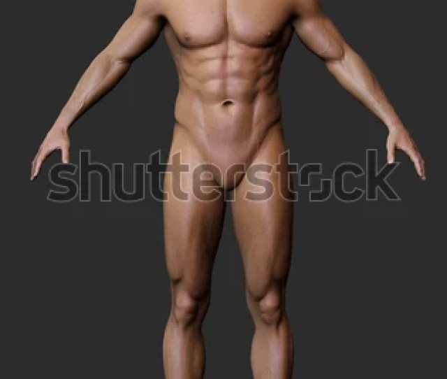 3d Male Body Anatomy Naked