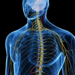 Vagus Nerve Diagram Dodge Ram Wiring 2007 Images Stock Photos Vectors Shutterstock 3d Rendered Medically Accurate Illustration Of The