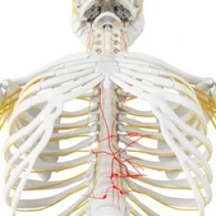 Vagus Nerve Diagram Holden Vz Stereo Wiring Images Stock Photos Vectors Shutterstock 3d Rendered Medically Accurate Illustration Of The