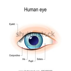 Parts Of The Eyelid Diagram Mk3 Golf Wiring Anatomy Human Eye Front View External Stock Illustration 685689190 In Schematic Detailed