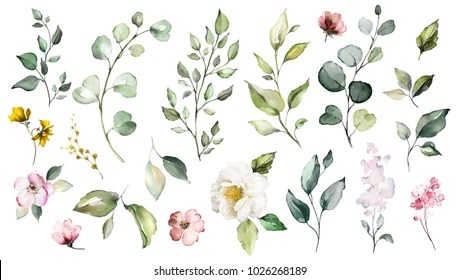 watercolor flower images stock
