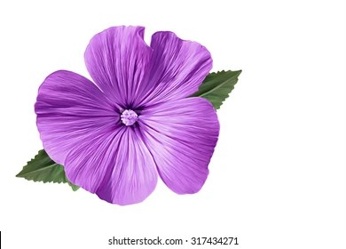 purple flowers images stock