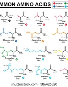 Educational chart with all the common amino acids represented color coded side chains also acid images stock photos  vectors shutterstock rh