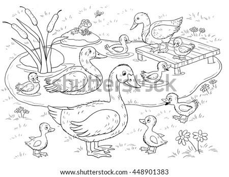 Farm Domestic Animals Cute Duck Ducklings Stock