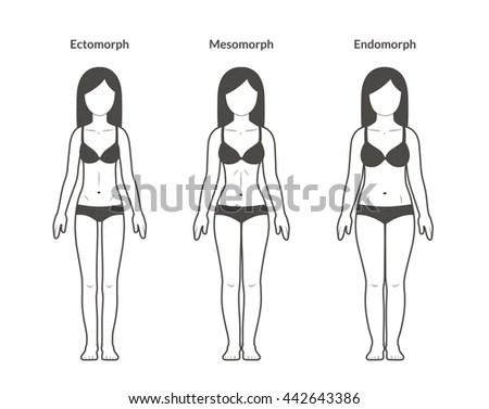 Female Body Types Ectomorph Mesomorph Endomorph Stock
