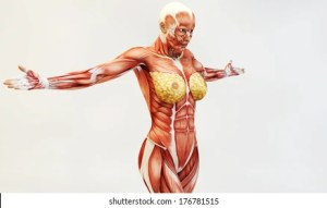 Female Muscle Anatomy Images, Stock Photos & Vectors   Shutterstock