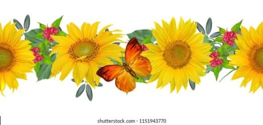 sunflower border horizontal sunflowers shutterstock floral flowers butterflies bright vectors transparent garland these pngio