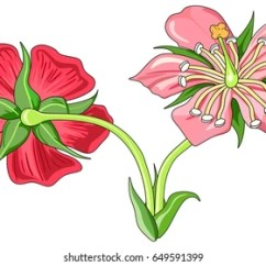 Parts Of A Flowering Plant Diagram And Animal Cell Worksheet Royalty Free Stock Illustration Flower Stem Cross Front Back View With All Unlabeled Useful For School Education