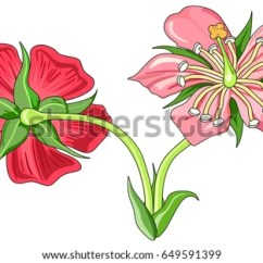 Flower Parts Diagram Without Labels Epiphone Sheraton Wiring Royalty Free Stock Illustration Of Front Back And View With All Unlabeled Useful For School Education