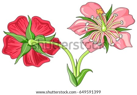 flower parts diagram without labels electrical wiring diagrams building royalty free stock illustration of front back and view with all unlabeled useful for school education