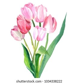 bunch of tulips images