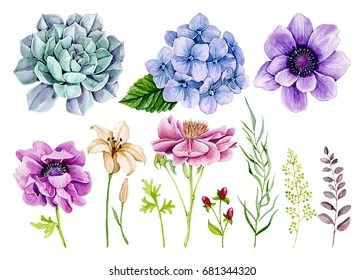 watercolor flowers images stock