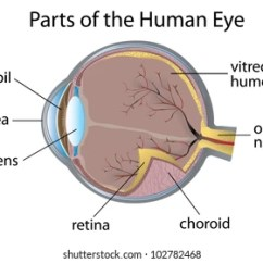 Human Eye Parts Diagram Klr 650 Wiring Images Stock Photos Vectors Shutterstock Illustration Of The Eps Vector Format Also Available In My Portfolio