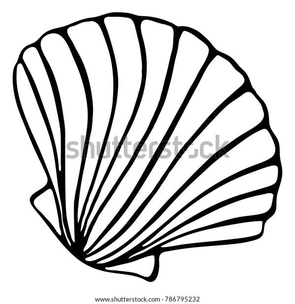 Monochrome Black White Sea Shell Seashell Stock
