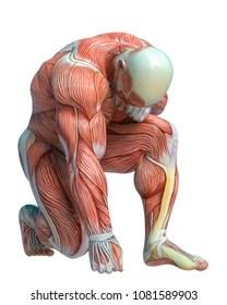 Imagens. fotos stock e vetores similares de Anatomy side view of major face muscles of a man including occipitofrontalis. temporalis. masseter ...