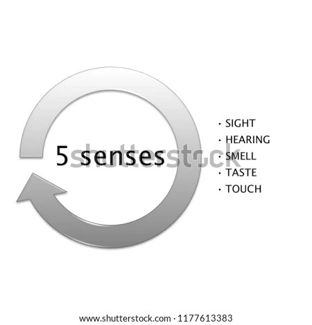 five senses diagram dual 2 ohm wiring of 5 block picture manufacturing business stock illustration my book printable