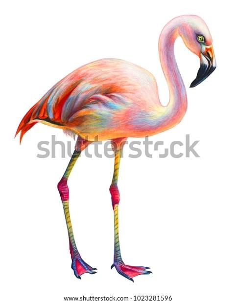 pink realistic flamingo drawing