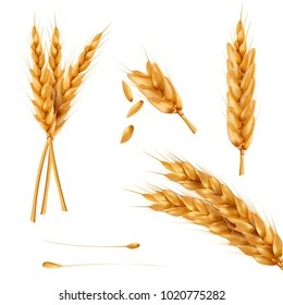 wheat sheaves images stock