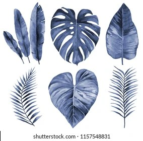 blue leaves images stock