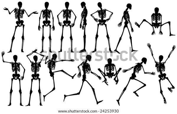 Set Male Skeleton Outlines Vector File Stock Illustration