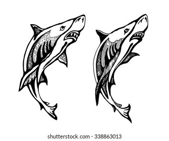 White Shark South Africa Stock Illustrations, Images