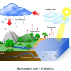 Labelled Diagram Of Water Cycle Family Tree Template Images Stock Photos Vectors Shutterstock The Sun Which Drives Heats In