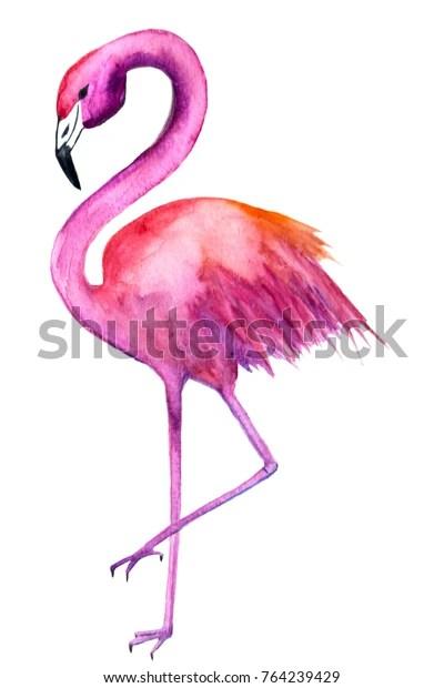 watercolor drawing flamingos stock