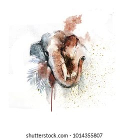 watercolor elephant images stock