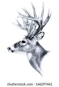 Deer Side View : Stock, Images, Shutterstock