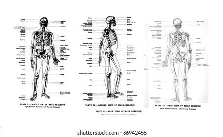 Medical Diagram Human Body Images, Stock Photos & Vectors