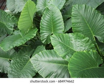 big green leaves images