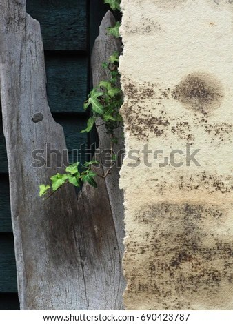 Is Plywood Toxic