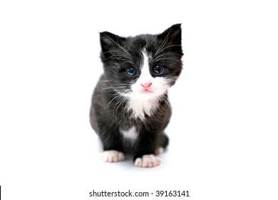 white kitten on black