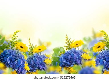 blue yellow flower isolated